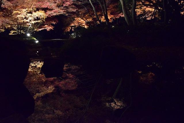 太田黒公園の紅葉ライトアップ